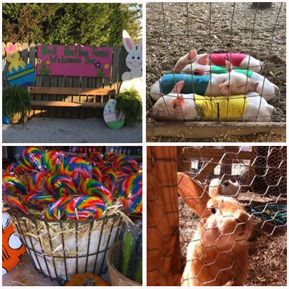 Join us for more farm fun this spring & Easter at Bull Bottom Farms in Duck Hill, Mississippi.